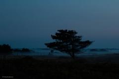 Erling - Mist
